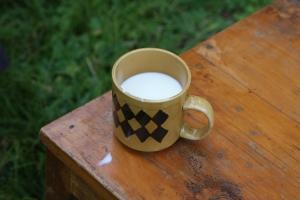 cup of milk_ du an khoi nghiep